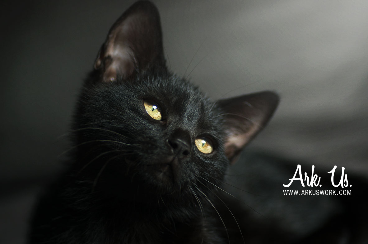 www.arkuswork.com