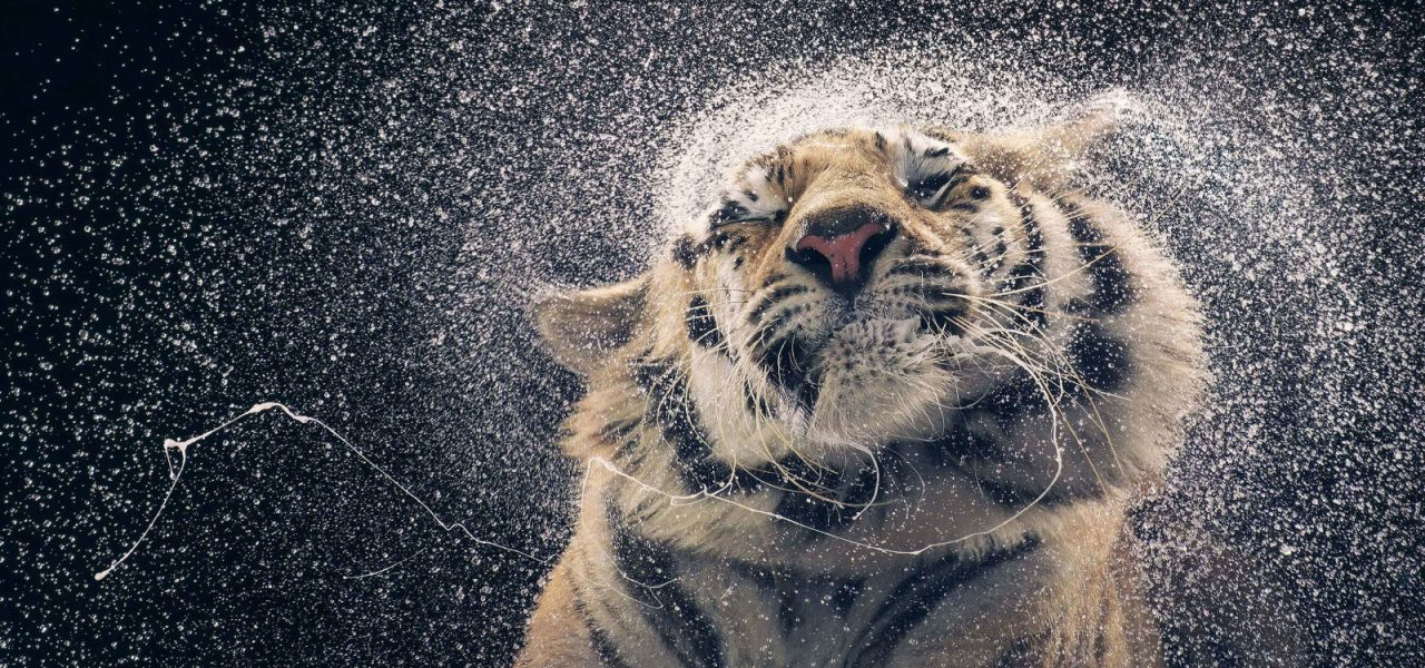 Tim Flach – photographe