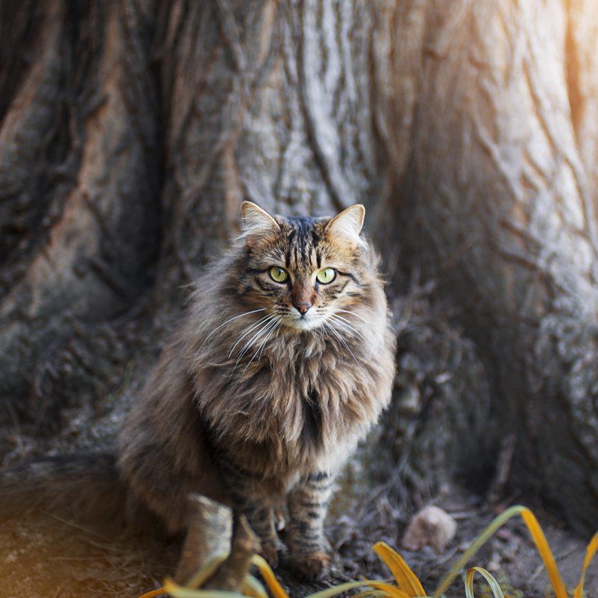 photographie photo chat séance shooting photographe animaux de compagnie var paca toulon félin chien lapin cheval