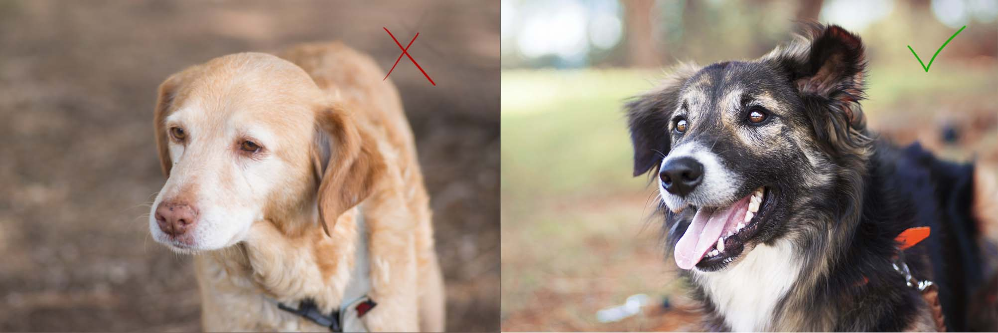 conseils photo photographie réussir animaux animalière chat animal compagnie photographe astuces techniques chien