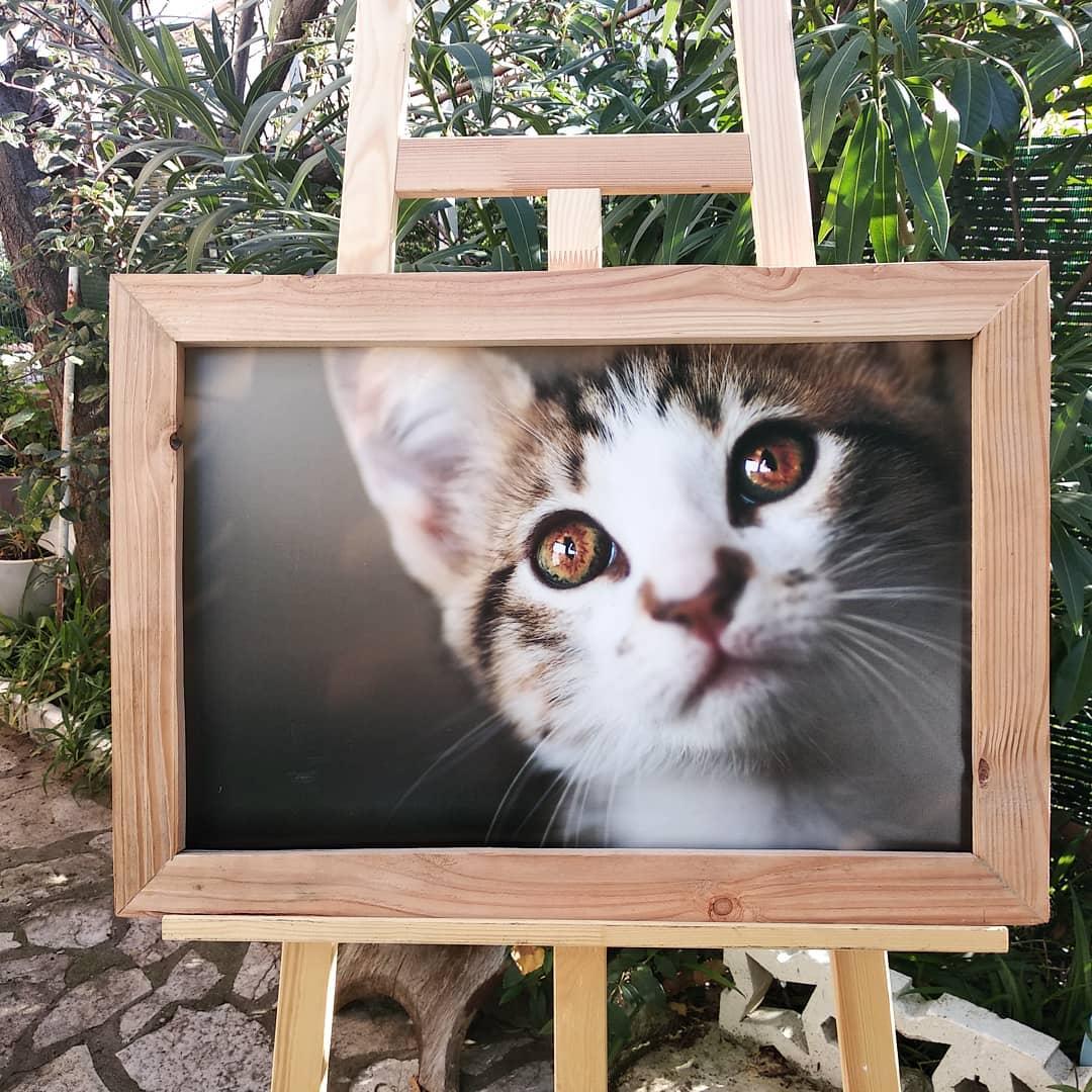 cat chat portrait photographe animalier animaux de compagnie tableau tirage cadre bois artisanal décoration portrait photographe var toulon paca