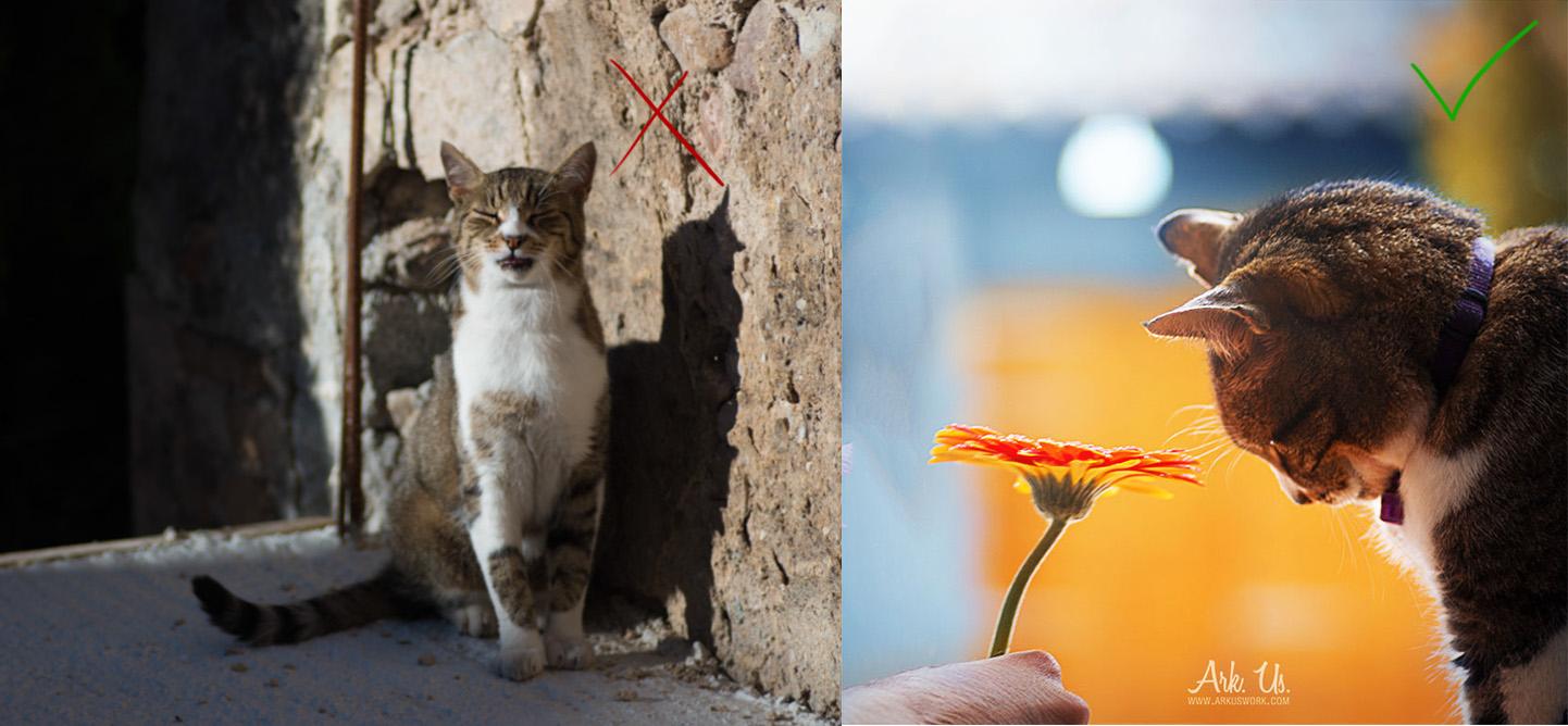 conseils photo photographie réussir animaux animalière chat animal compagnie photographe astuces techniques chat