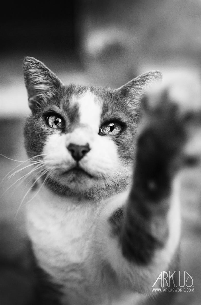 photographie reportage chats errants nourrissage mère nourricière var de rue abandonnés photographie animalière animaux de compagnie