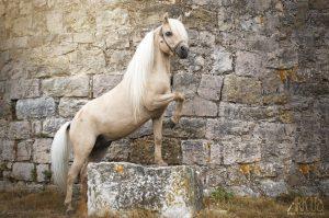 cheval,retouche,photoshop,post traitement,miniature,nain,photographe,animalier,animaux,photographie,animal de compagnie,var,toulon,paca,france
