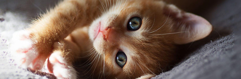photo domicile photographe animalière animaux de compagnie chat chien cheval lapin nac rat serpent oiseau chaton roux portrait var toulon