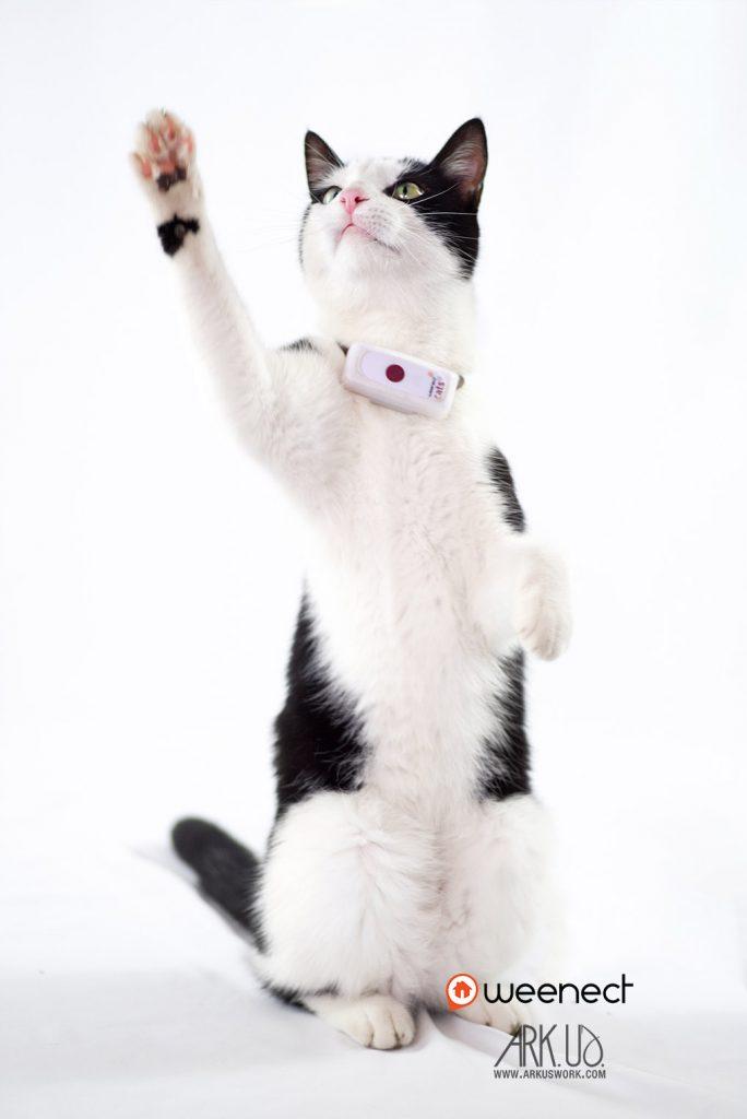 chat, noir et blanc, europeen,gouttière,photo,photographie,gps,weenect,collier,geolocalisation,animalier,animalière,photographe,france,toulon,var,paca,marseille,nice,nature, paris