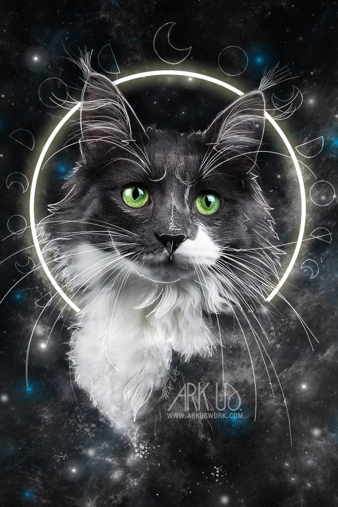 chat,lune, stellaire, etoile, lunaire, imaginaire, original,felin,animal,compagnie,maine coon,digital,art,artwork,dessin,numerique,photoshop,photo,photographie